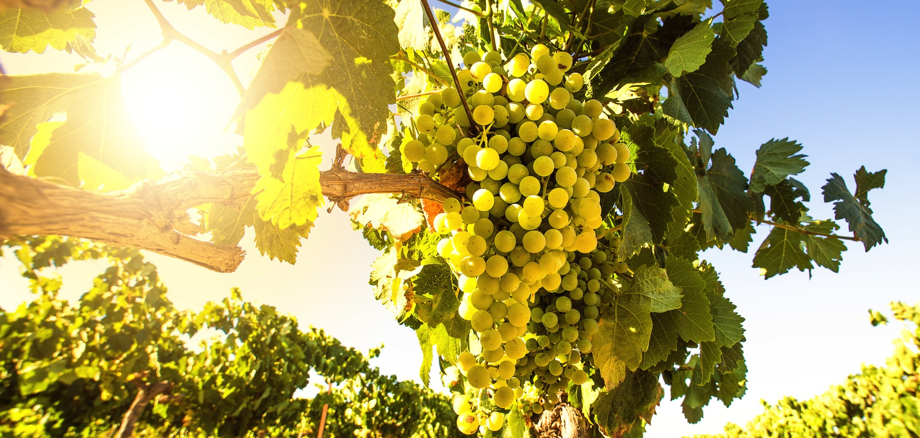 5 Reasons to Love Vermentino Wine