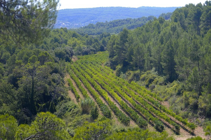 Biodyanmic vineyards in the Pares Balta winery, Spain
