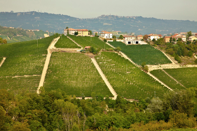 Pio Cesare vineyards