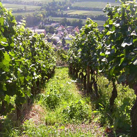 Franz Keller's Vineyards