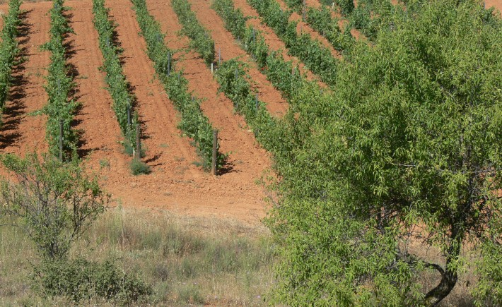 Vines at the Viñedos de Yaso winery (producers of our own Yaso Toro)