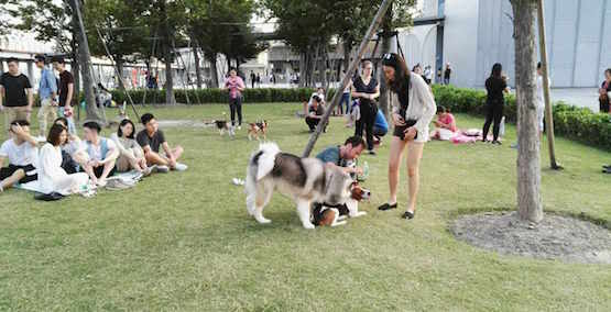 Shanghai | Join Us with Your Dog for Puppies in the Park on Saturday, 7th April!